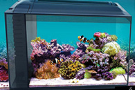 9 Ways to Take Control of Your Aquascaping
