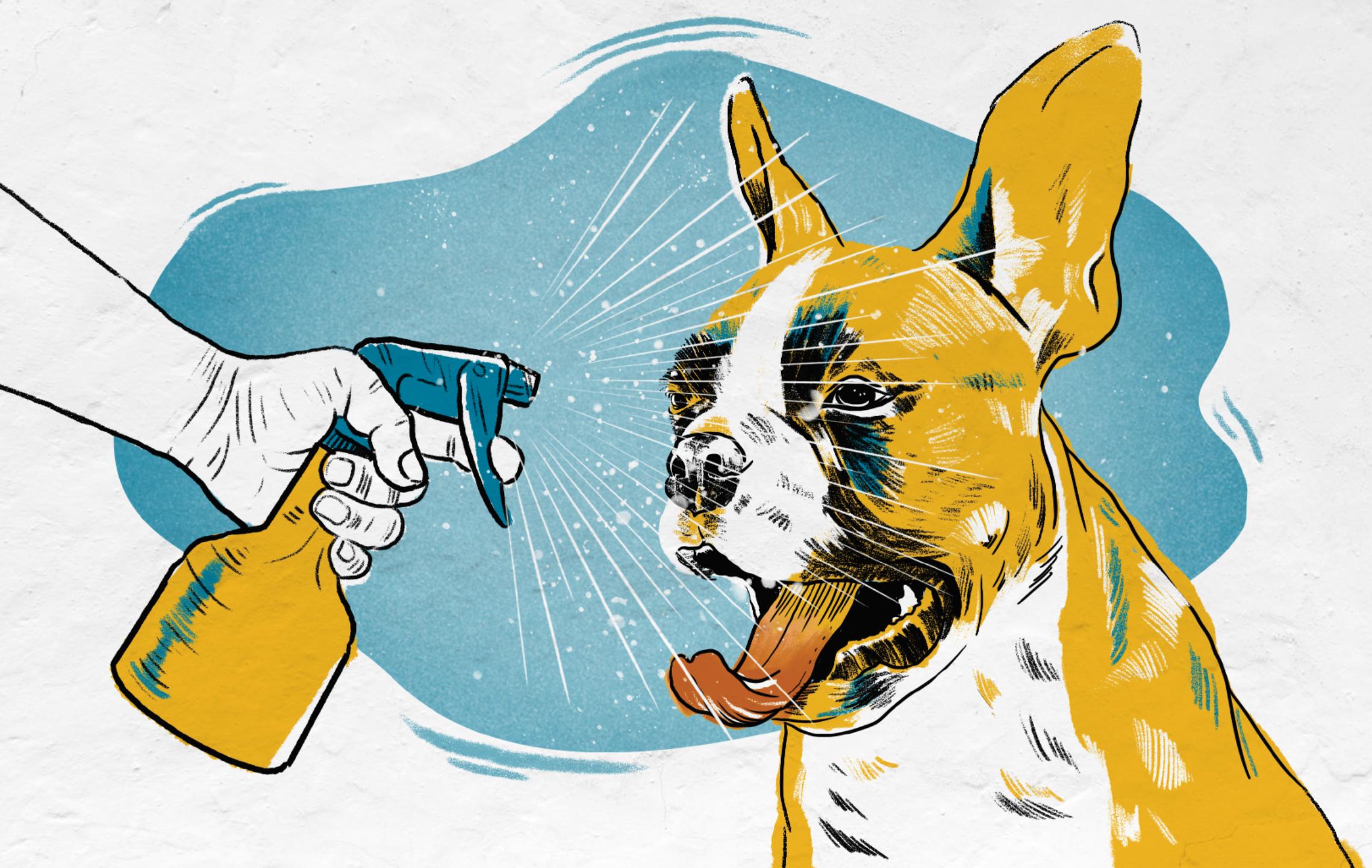 Craigslist Nashville Pets For Sale