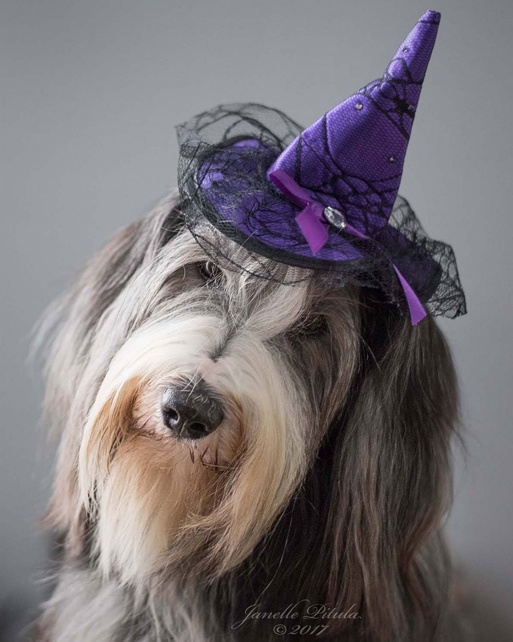 17 Adorable Halloween Costumes Your Fellow Pet Pros Swooned Over