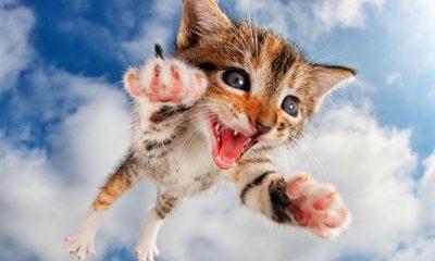 Cat book Pounce