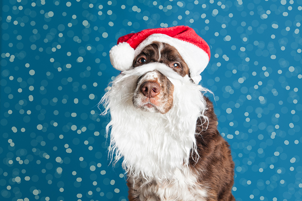 Take Our Quiz to Identify the Animal Stars of Some Christmas