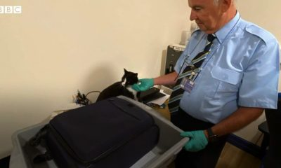 Video: Cat Surprises Airport Security After Stowing Away in Family's Luggage