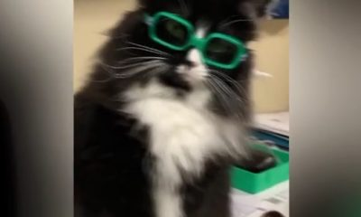 Video: Adorable Cat Melts Hearts By Trying on Eyewear for Children