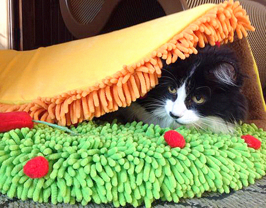 Taco Meow Cat Bed from ShopMeoow