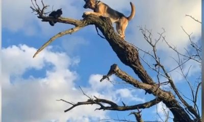 Video: Dog Gets Stuck in Tree, Has to Be Rescued by 911