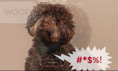 Cuss Dog Collar