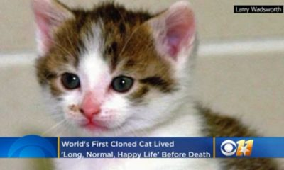 World's First Cloned Cat Dies at 18 (Video)