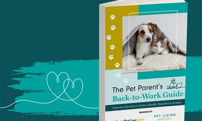 Pet Parents Back to Work Guide