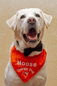 Therapy Dog Moose