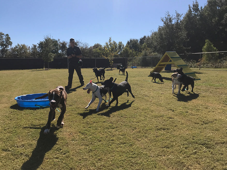 Dogs Playing For Life's innovative Playgroup program