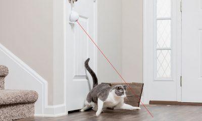 PETSAFE Dancing Dot Laser Cat Toy