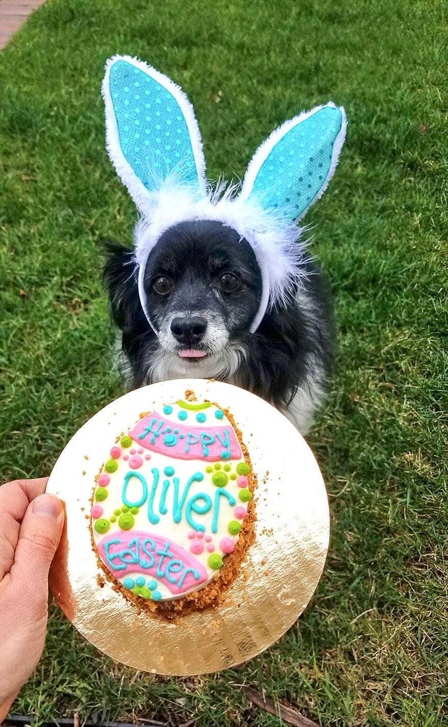 Happy Dog Barkery, IL birthday cake
