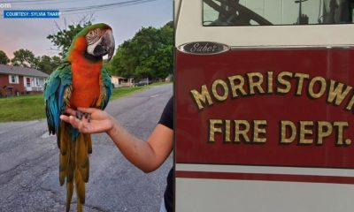Macaw rescued from tree