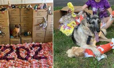 Fluff & Tuff toy donation