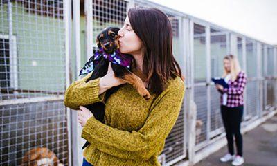 Pet Releaf rescue initiative