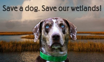 SAve a Dog-save our wetlands campaign