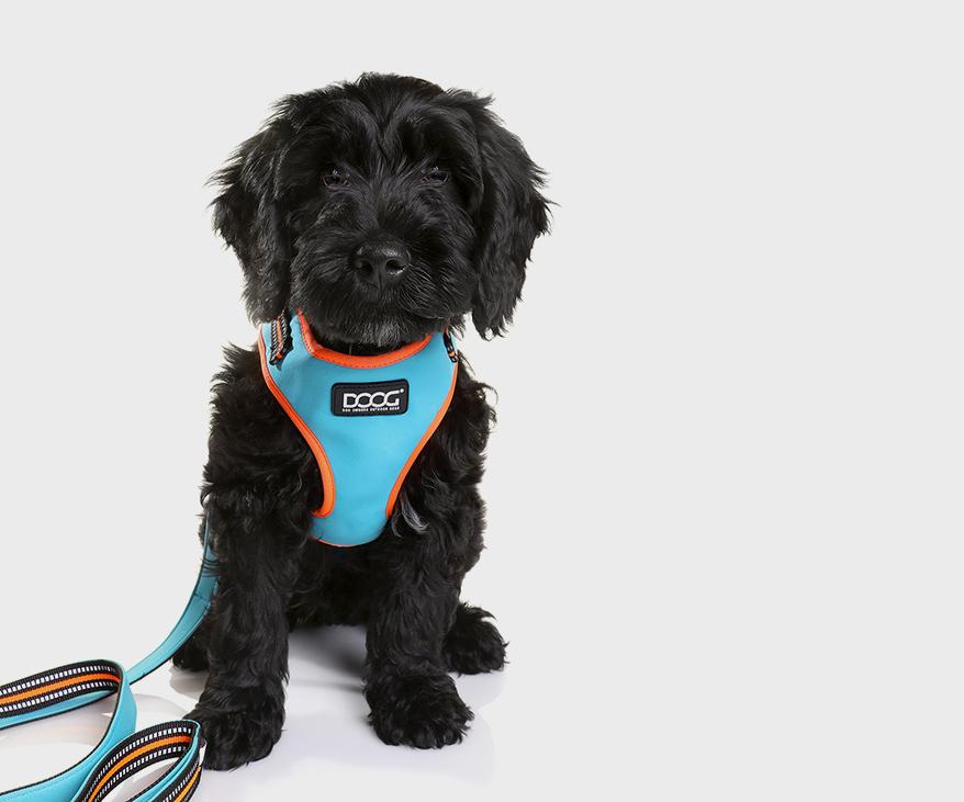 DOOG Neon 16 Groodle Pup
