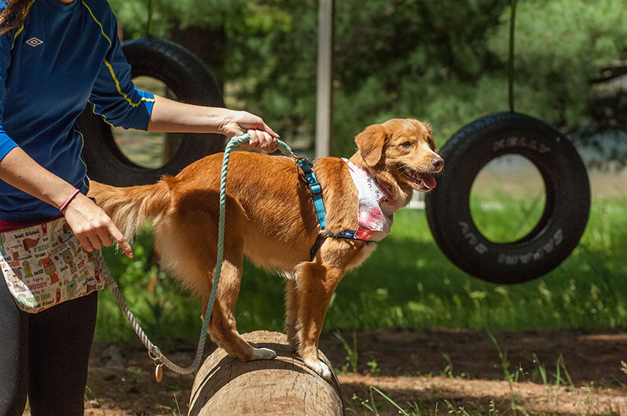 Campers navigate the Dog Parkour course at Camp Dogwood