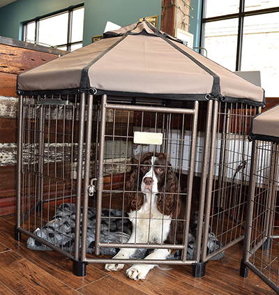 Just for Paws pet gazebo