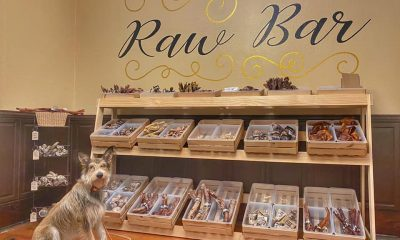 Get Inspired by These Chew Displays at Indie Pet Stores