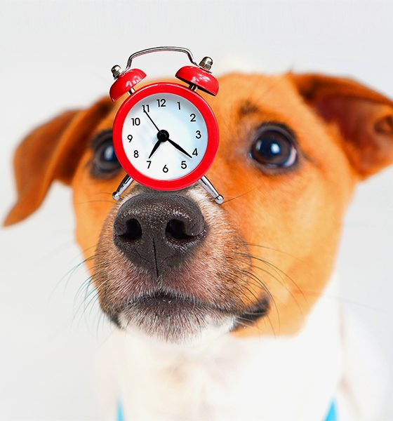 clock on top of dog's nose