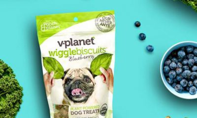 v-planet wiggle biscuits