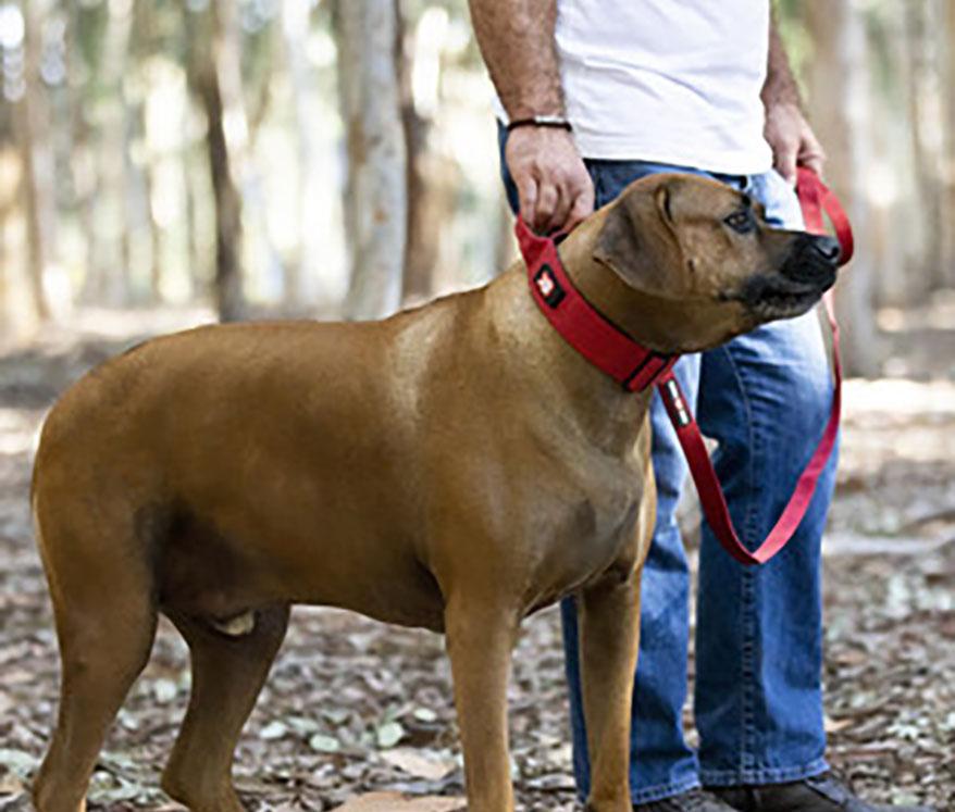 Boss Dog Brand dog leash