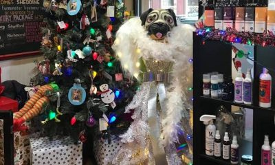 Even the Scroogiest of Pet Parents Can't Resist These Holiday Displays