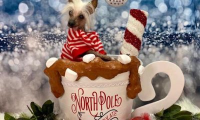 Holiday Pet Photos: Pics with Santa, Selfie Stations and More