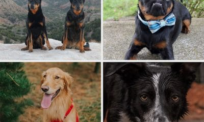 AKC dogs