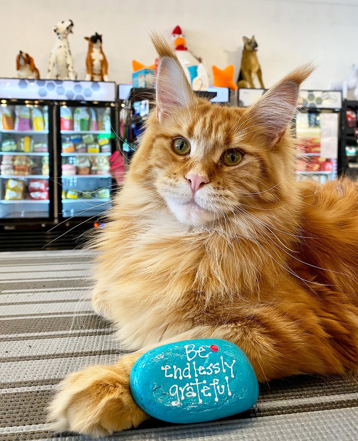 Sniffanys-Pet-Boutique cat Sunny
