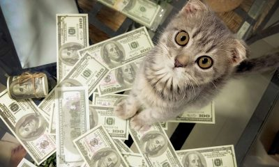 cat and dollar bills
