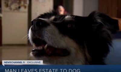 Dog inherits 5 million