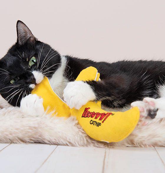 "cat playing ""Yeowww!"" Catnip Toys"