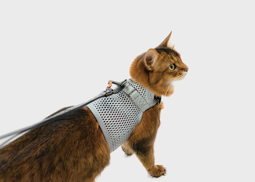 sleepypod walking harness