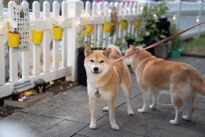 Hawaii-Doggie-Bakery-Garden