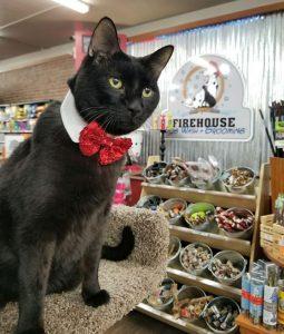 Firehouse-Pet-Shop-Mr.-Carmen
