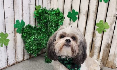 How Indie Pet Businesses Are Celebrating — and Selling — St. Patrick's Day