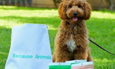 Because, Animals Dog Cookie