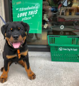 pup outside Green-Dog-Pet-Supply
