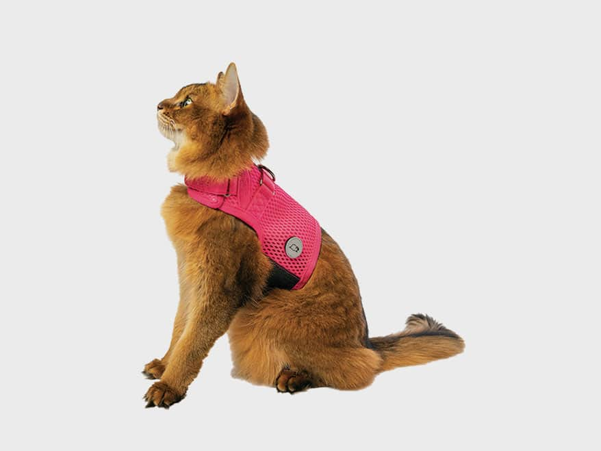 SLEEPYPOD Martingale Cat Harness
