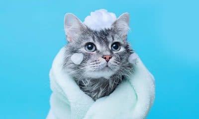kitten-wrapped-in-blanket