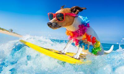 surfing dog wearing suns