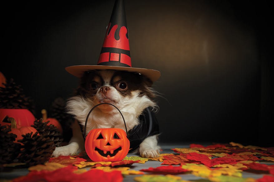 dog posing for halloween picture