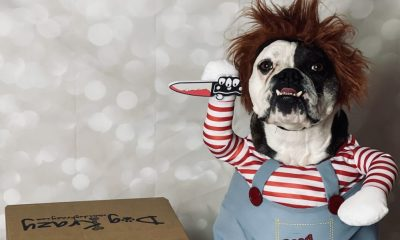 How Indie Pet Stores Are Celebrating — and Selling — Halloween